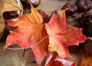 C1046-Herbstlaub